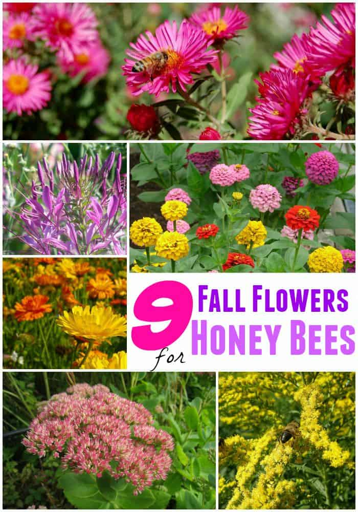 9 Fall Flowers for Bees to help them overwinter