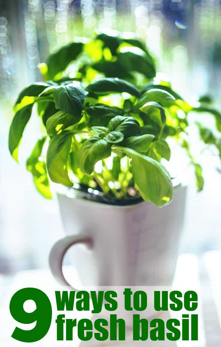 9 Ways to use fresh basil