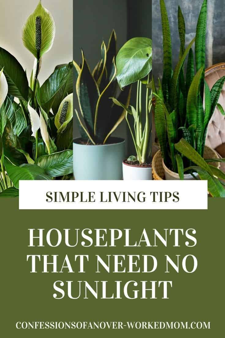 Are you looking for indoor plants that need no sunlight? Check out this list of plants that grow without sunlight and start growing today.